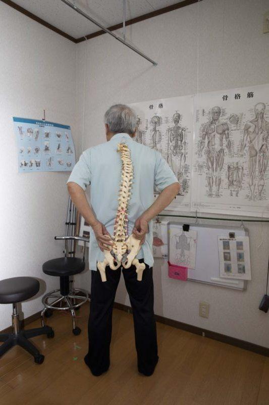 背骨から骨盤まで